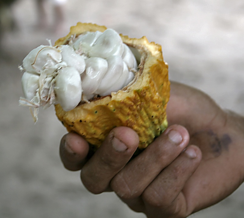 Pulp of Cacao