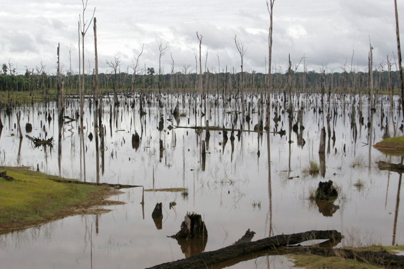 Dead trees in the upper reaches of Balbina Reservoir, Amazonas