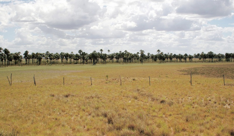 Gallary forest in Roraima Grassland