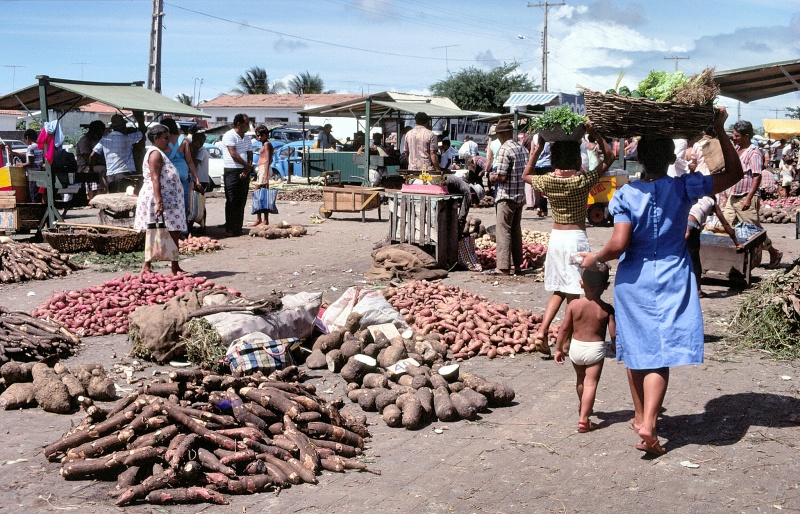 Various potatoes sold in a fair