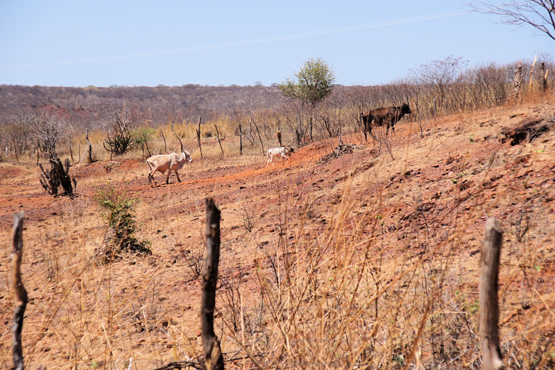 Caatinga ranch in the dry season